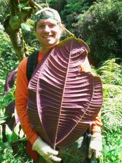 Miconia underside of leaf