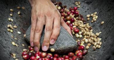 zöld kávé kivonat