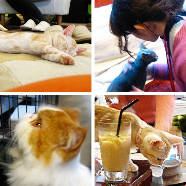 Qualche foto scattata al cat-café Calico, a Tokyo