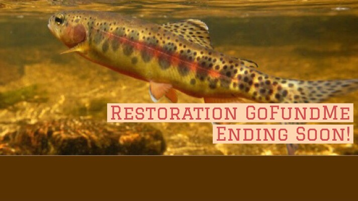 GoFundMe for Golden Trout Habitat