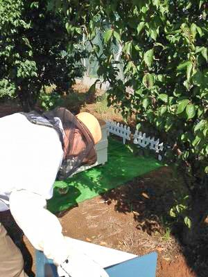 養蜂事業 豊川市 ミツバチプロジェクト - 1