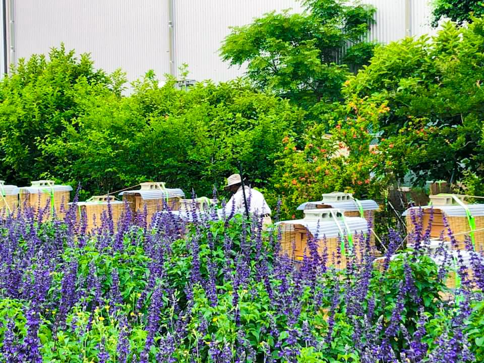 KAYAMAファーム 環境保全 緑化 養蜂 ミツバチプロジェクト 豊川市 リサイクル
