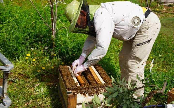 ミツバチ 分蜂 養蜂 豊川 CSR SDGs