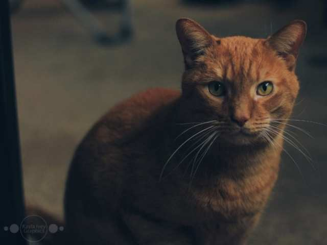 Cinnamon Pet Portraits
