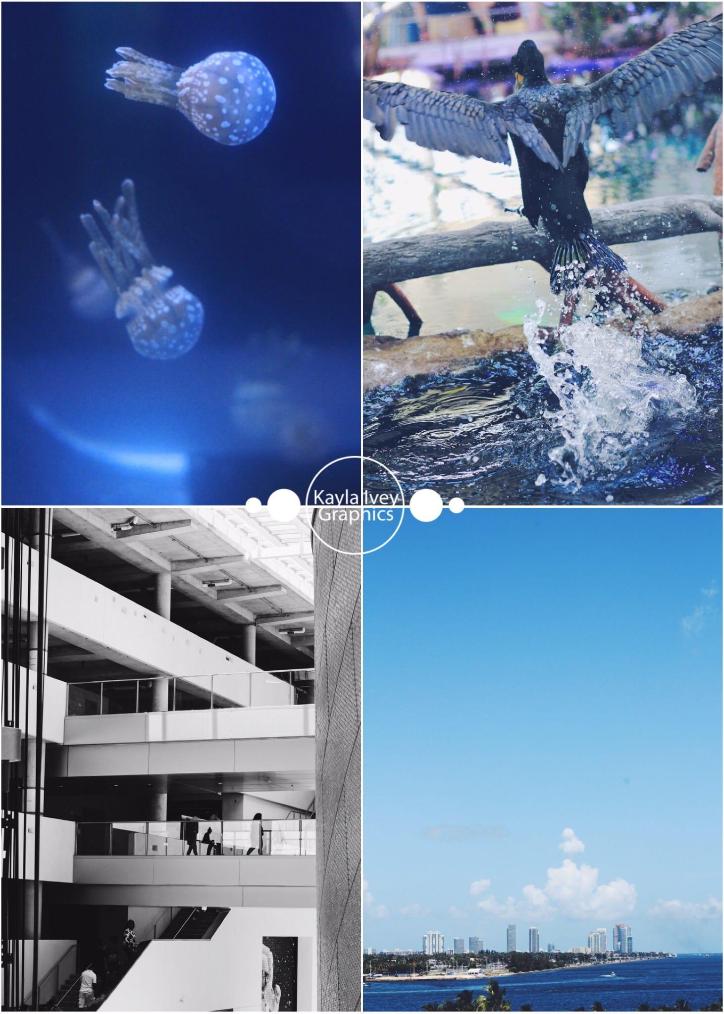 Frost Science Museum, Miami FL