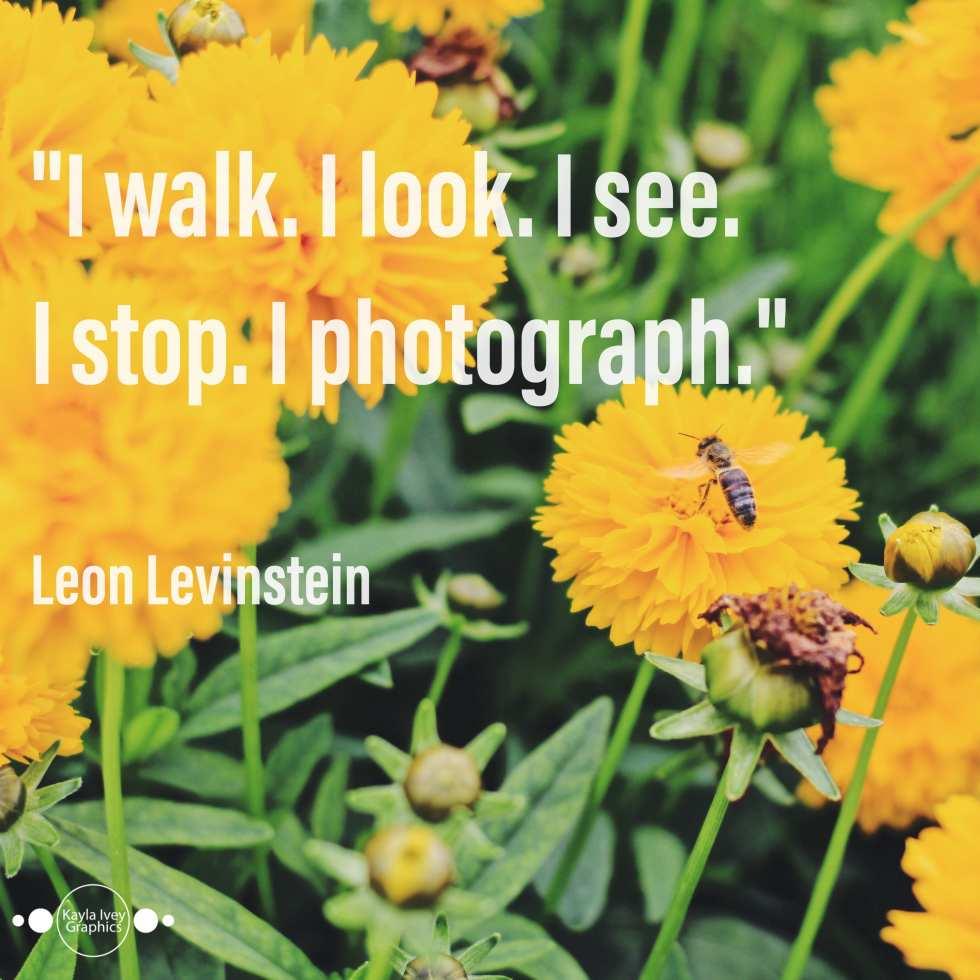 I walk. I look. I see. I stop. I photograph. - Leon Levinstein