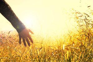 hand reaching for golden grass at sunset