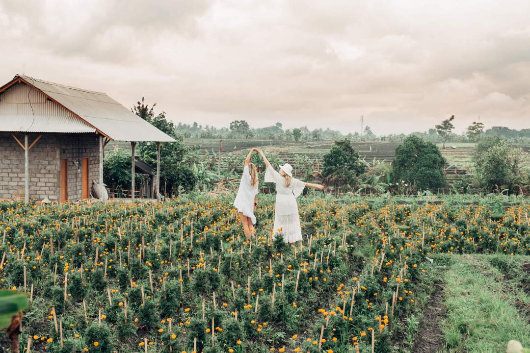 Girls Dancing in Rice Fields