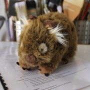 New children's picture book contract with Wombat Books