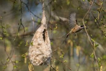 Start vom Nest