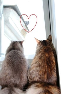 These two avid bird watchers do not qualify for work on the bird census