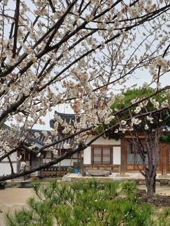 Busan day 4 - Gyochon Traditional Village 7