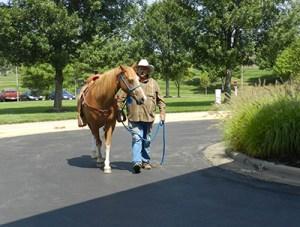 James Horse 3