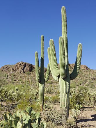 Tucson Securities & Investments Sector