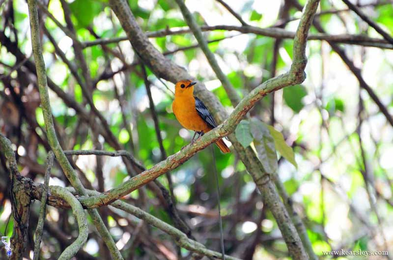 mahale national park bird