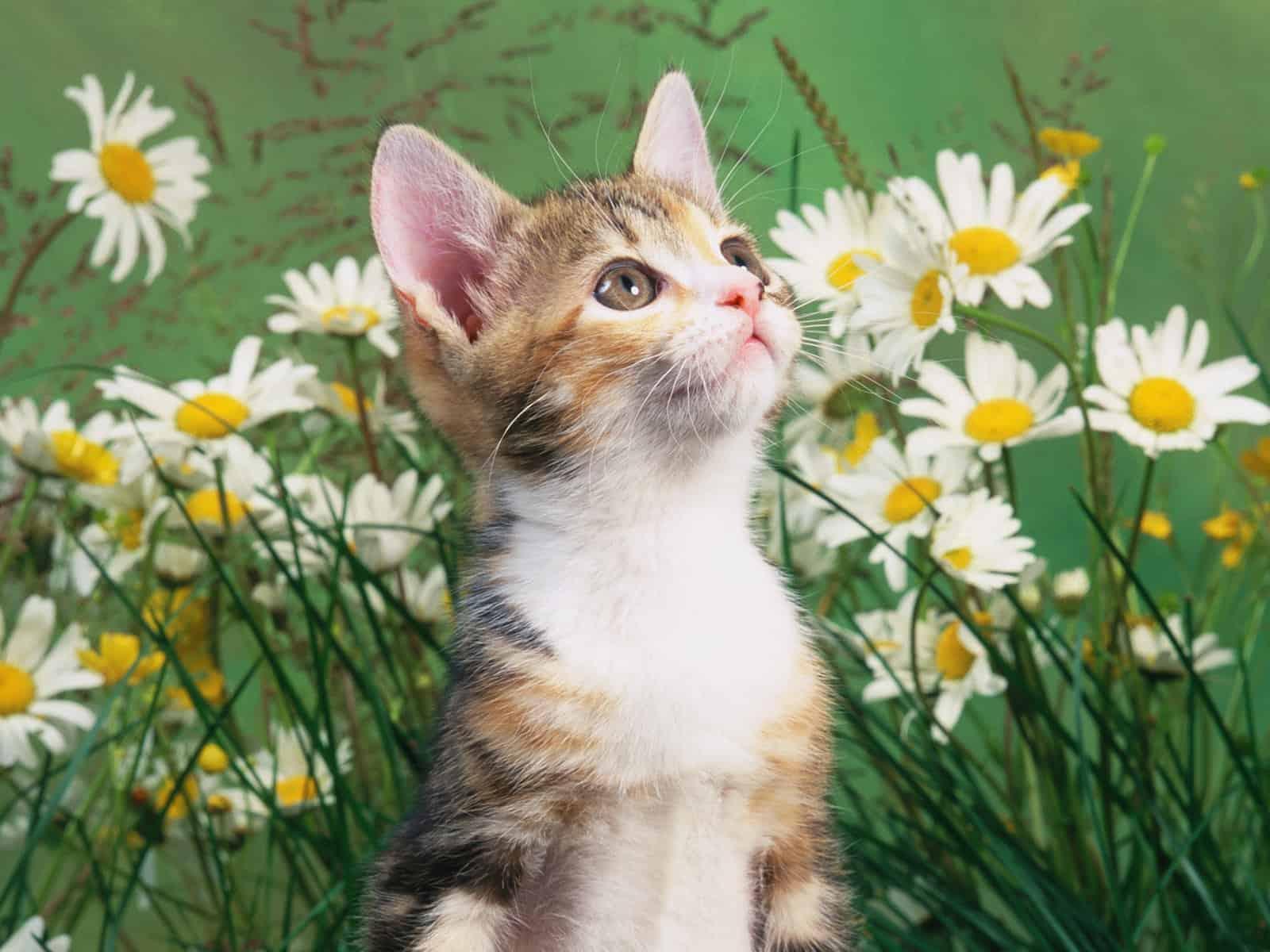 doğa ve kedi