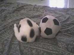 futbol topu kedi