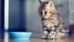 Kedilerde hızlı mama değişimi için öneriler