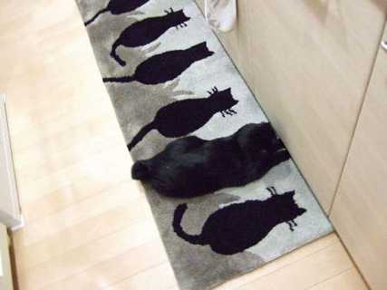 paspas kedi