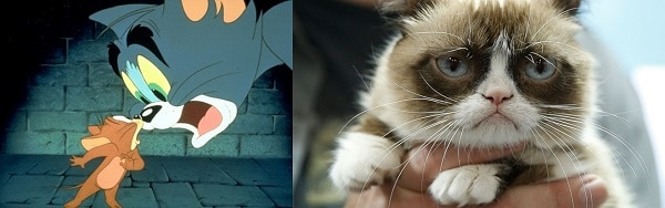 Tom ile karşılaştırılırken şimdi suratsız Grumpy Cat ile aşık atıyoruz