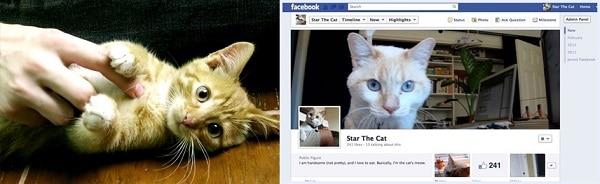 Sahibimin arkadaşları eskiden beni sevmeye eve gelirdi, şimdi Facebook'ta fotoğraflarımı like ediyorlar