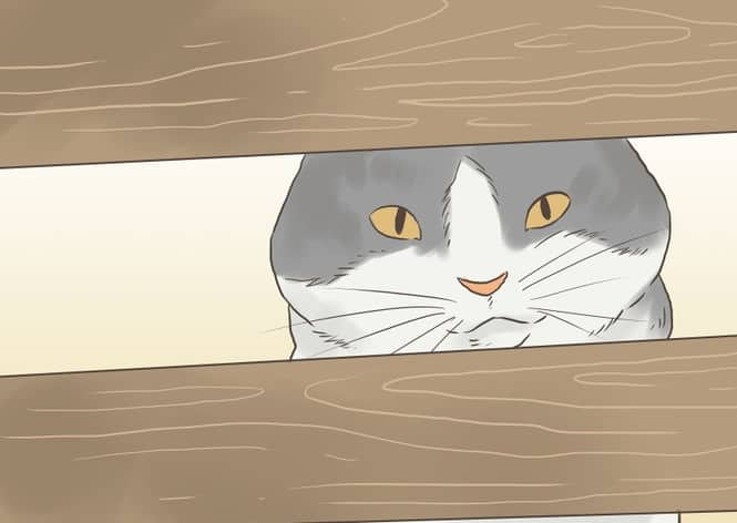 670px-Find-a-Lost-Cat-Step-10-Version-2