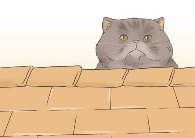 670px-Find-a-Lost-Cat-Step-12-Version-2