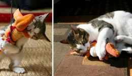 29 kedinin oyuncakları ile birlikte önce ve sonra resimleri