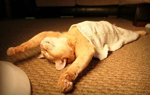 funny-sleeping-cats-1