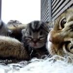 anne kedi 4