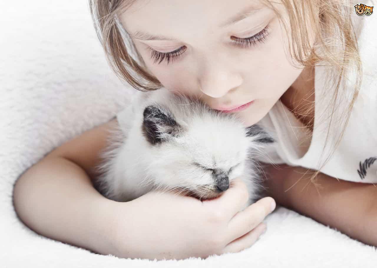 ocuk kedi sahiplenme