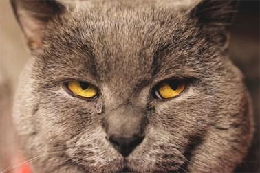 Kedimin Gözleri Neden Sulu ?