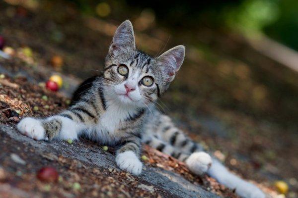Cat_photos_4