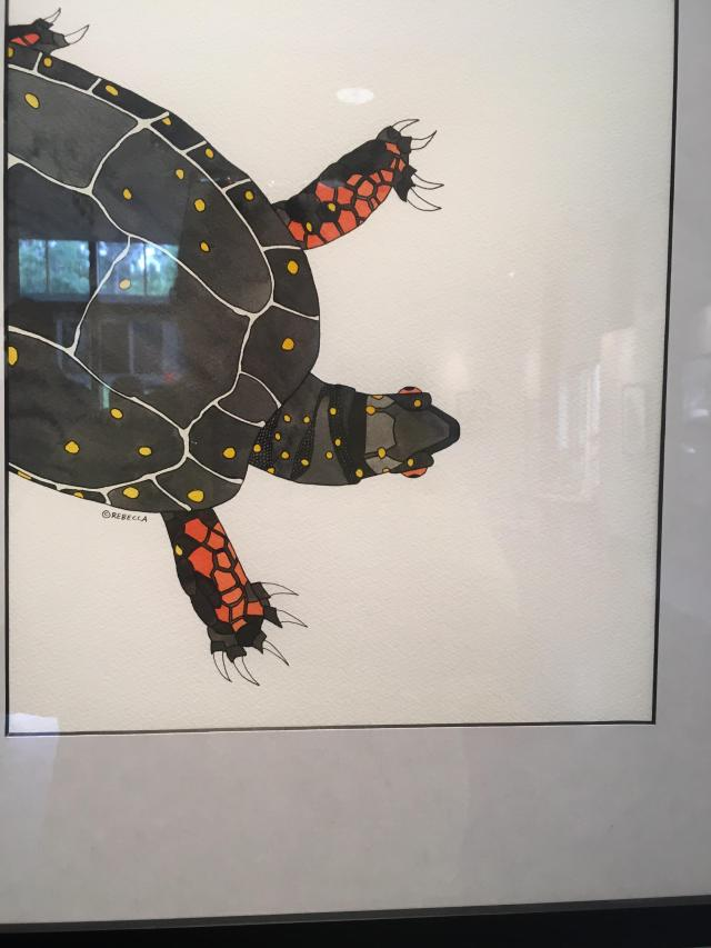 drawing of spoted turtle
