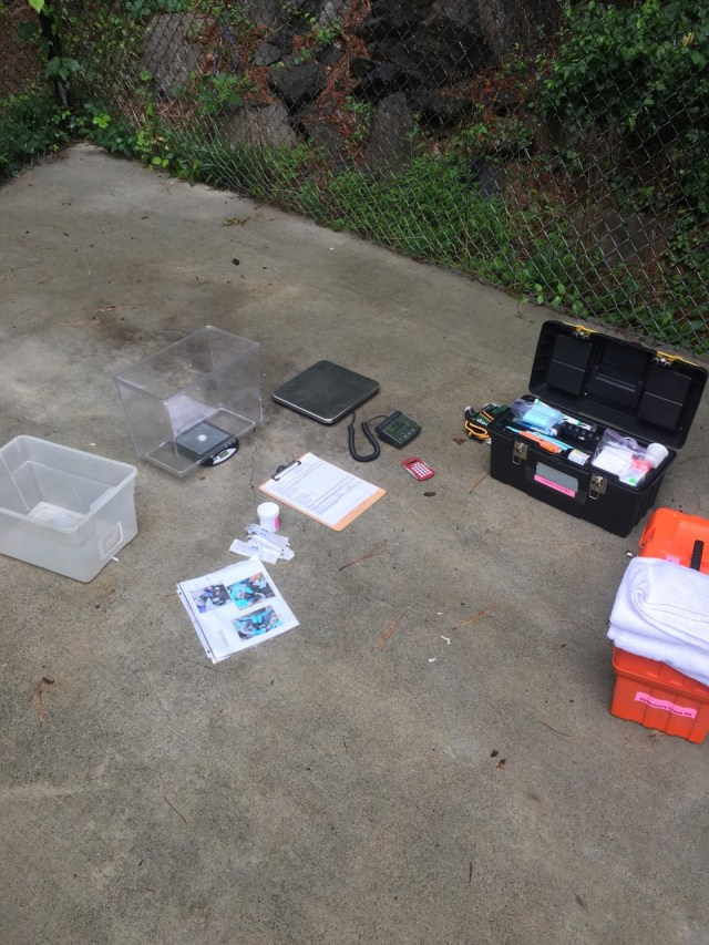equipment for pup checks on concrete pad