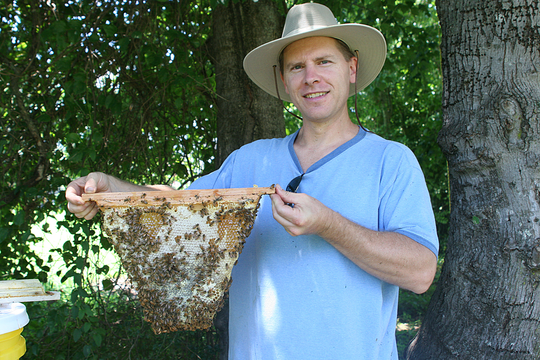 """The Advantages of """"Small Cell Bees"""" Keeping Backyard Bees"""