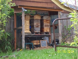Three Warre' hives...and a short green stool.