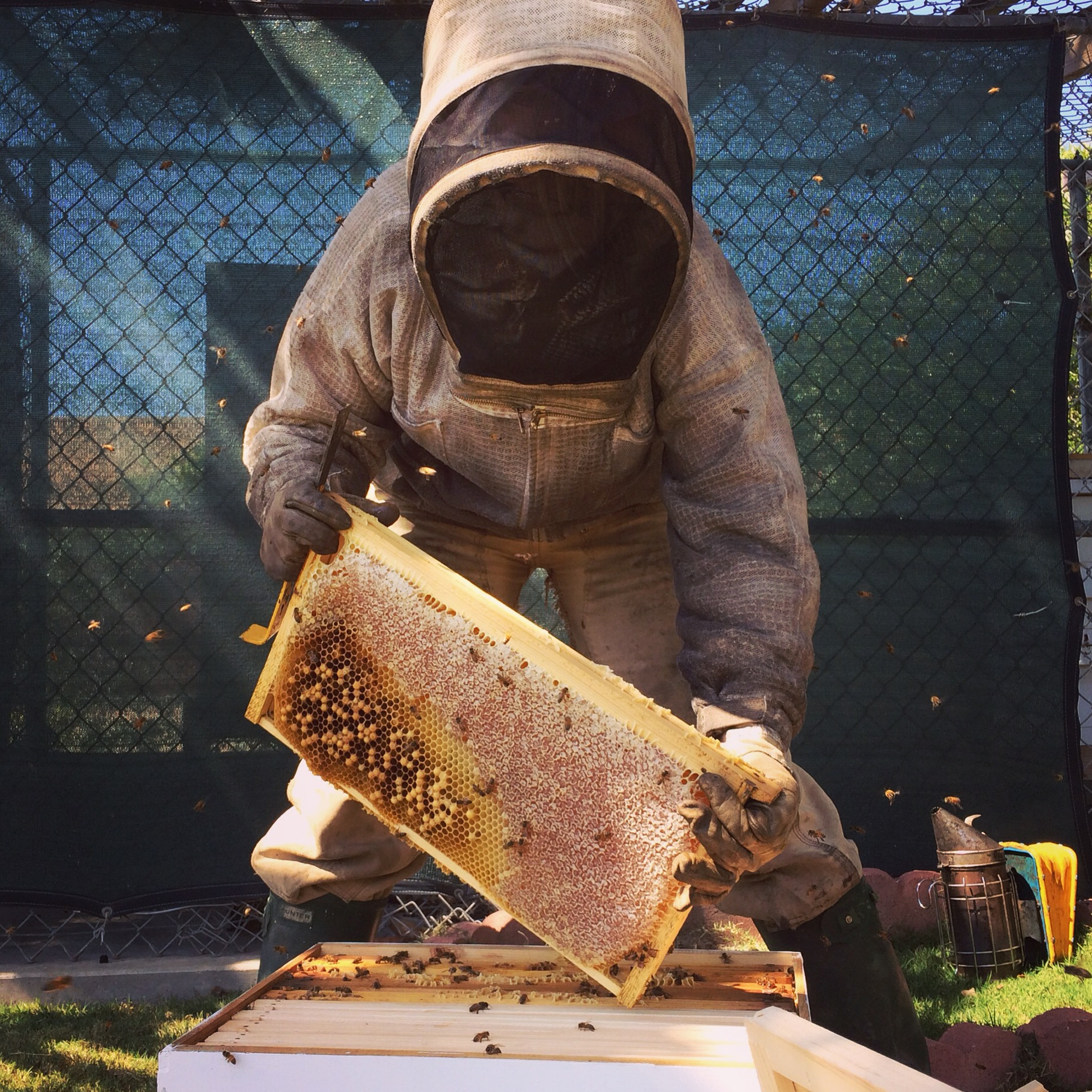 HOW TO WALK AWAY FROM A MOODY HIVE Keeping Backyard Bees