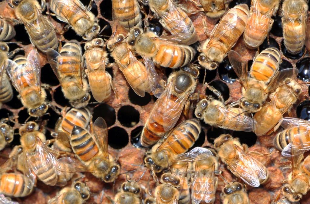 Queen Bee photo by Hilary Kearney