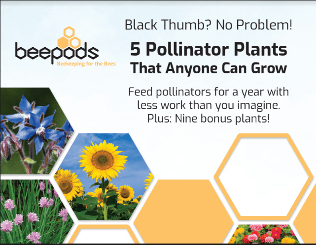 Beepods Pollinator Planting Guide