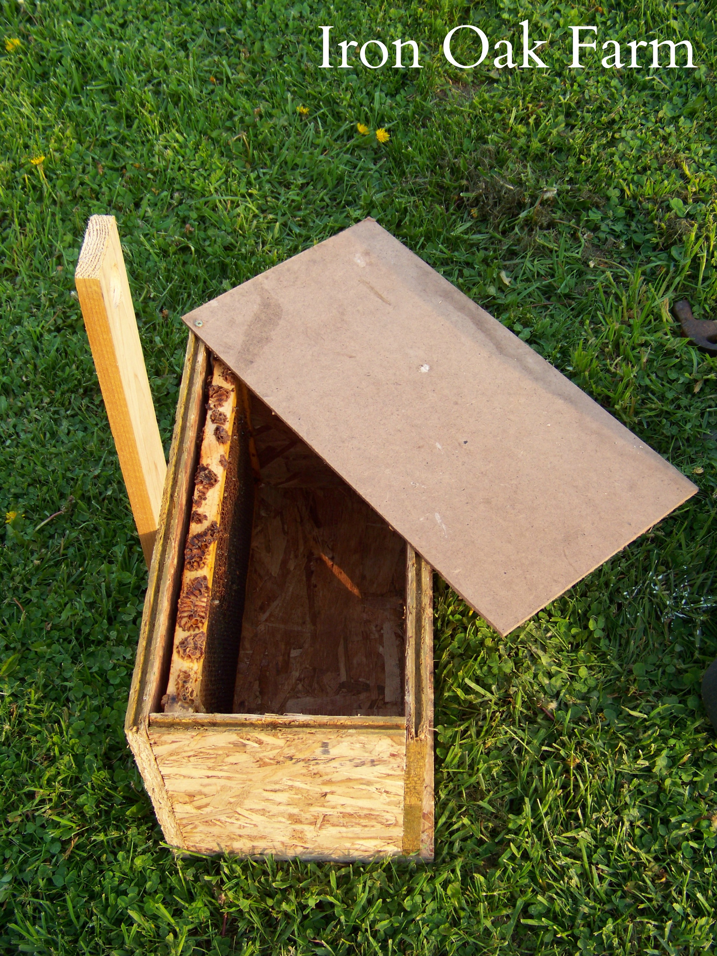 how to build a swarm box keeping backyard bees