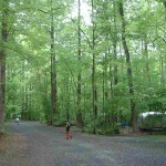 warwick woods