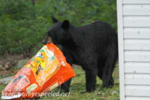 bear (5 of 17)