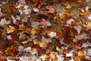Fall hike (6 of 26)
