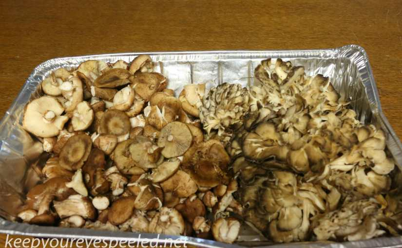 Better Late Than Never: Mushrooms Are Growing In Northeastern Pennsylvania.