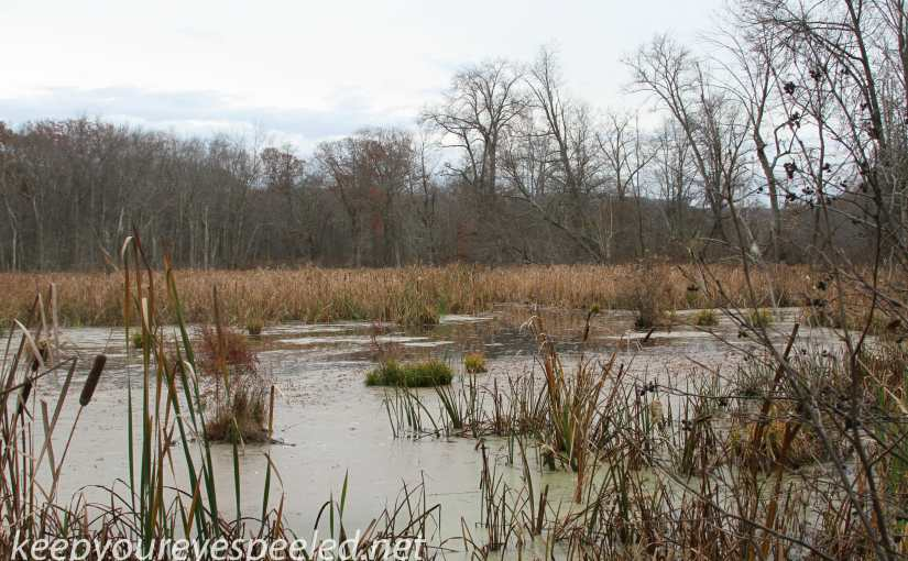 PPL Wetlands: Getting Ready For The Long Winter Sleep