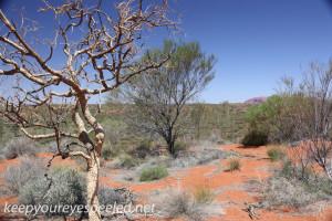Uluru Desert Gardens hike -22