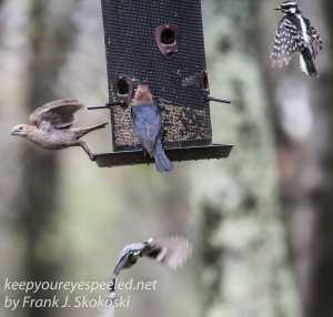 birds feeder -2
