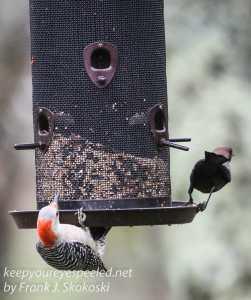 birds feeder -4