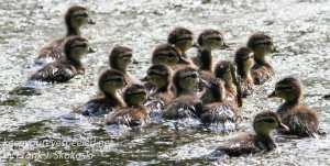 PPL Wetlands wildlife -7